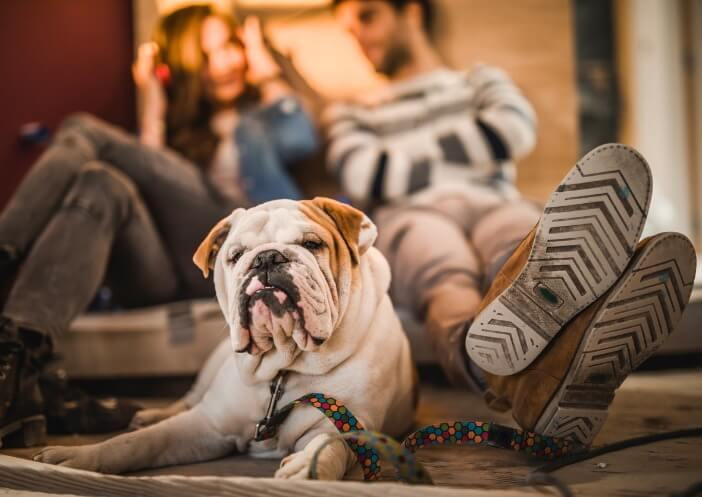 Image For 5 Apartment Must-Haves For Every Bulldog